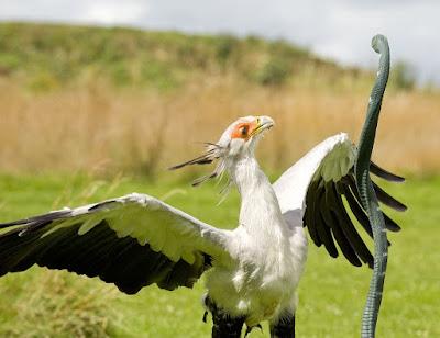 Uganda birding safari, safari Uganda, birding tour in Uganda,
