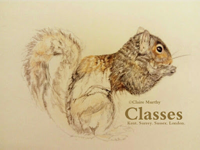 Wildlife art classes : local British wildlife art class.
