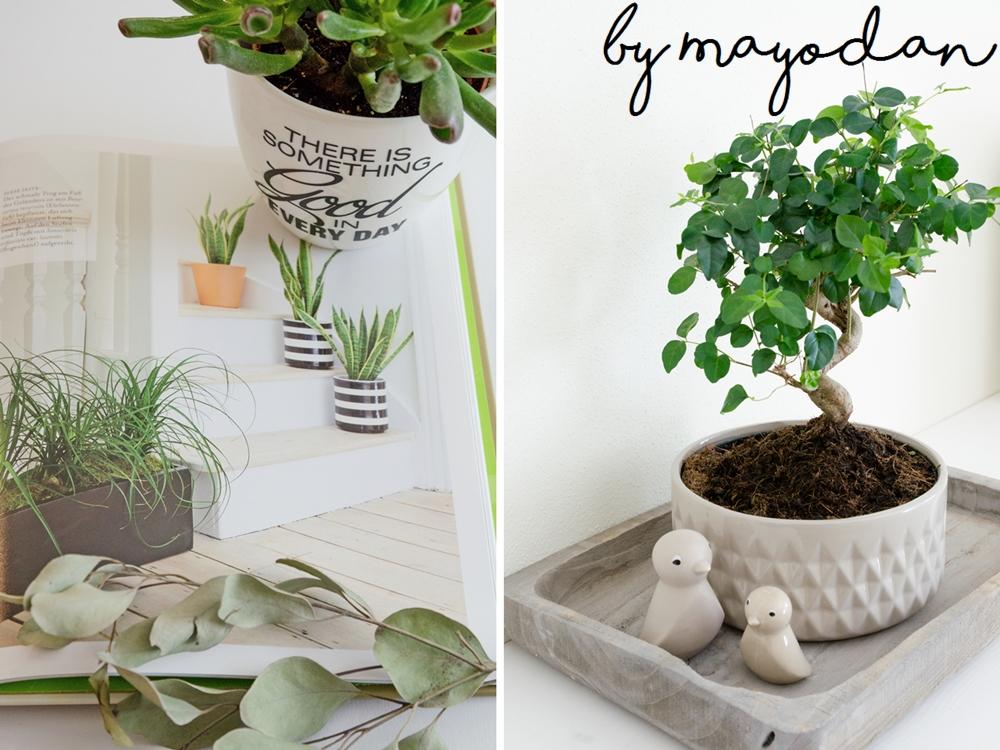 zimmer mit pflanze eine lebenseinstellung und eine buchvorstellung mayodans home garden. Black Bedroom Furniture Sets. Home Design Ideas