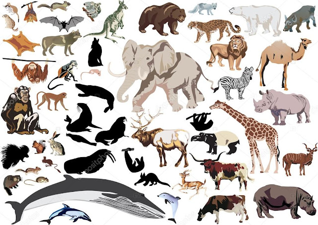 list of mammals