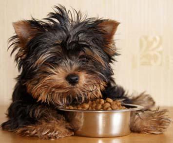 Eukanuba Puppy Dog Foods Economy Packs