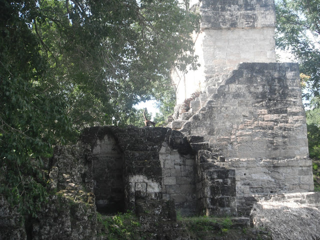Tikal National Park Guatemala Mayan ruins temple pyramid spider monkey