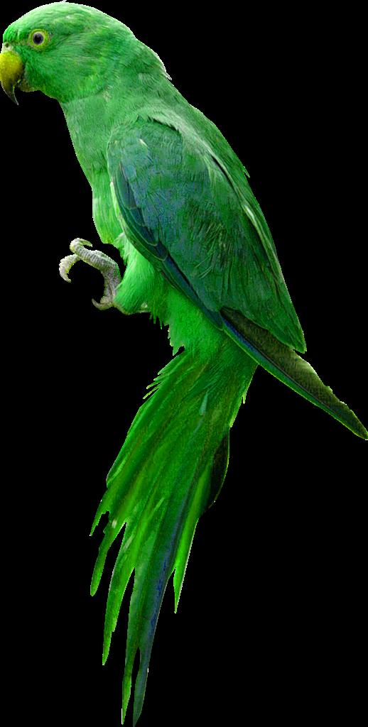 Cartoon Parrot Stock Photos And Images  123RF