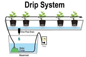 knowing and drip irrigation systems as a solution to increase production in drought