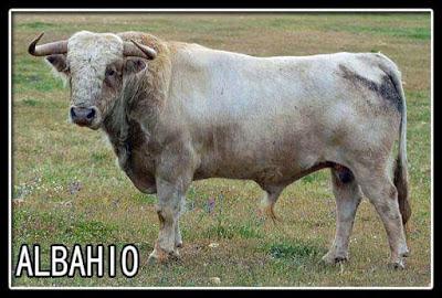Diferentes razas de toros - Página 5 FB_IMG_1523303978556