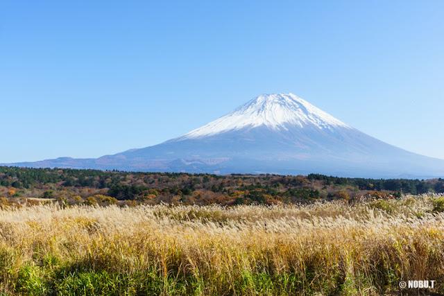 朝霧高原茅場と富士山
