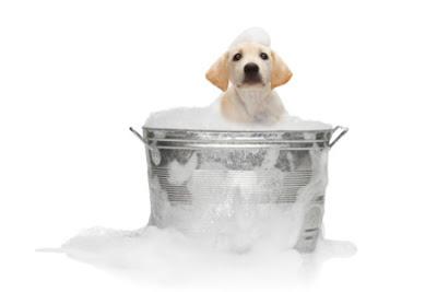 ¿Tiene garrapatas tu perro?
