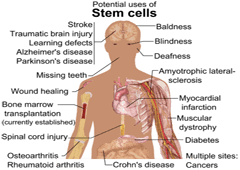 potentials of stem cell therapy