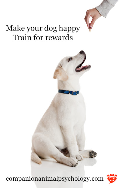 A happy Golden Retriever puppy sits for a food reward in dog training