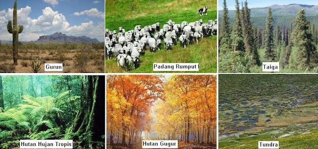 Pengertian Ekosistem dan Komponen Penyusun Ekosistem (Komponen Biotik dan Abiotik)