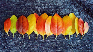 goldandgreen les ptits bonheur automne hapiness