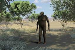 Ciri-Ciri Fisik Australopithecus Sediba