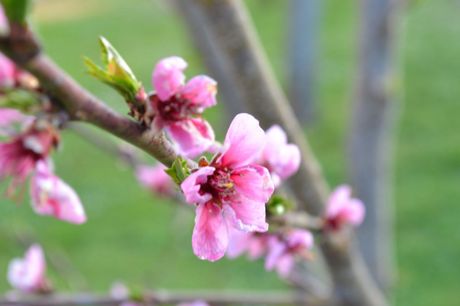 Rami Di Pesco Finti pistacchio e nocciola: fiori rosafiori di pesco