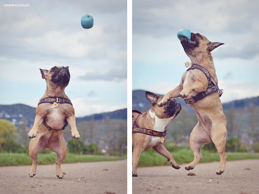 Hundeblog GenkiBulldog - Der Dopspfirsich
