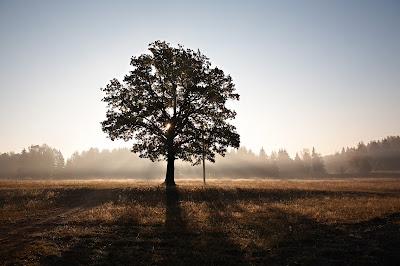 słońce, drzewa, heraldyka, herb, ziemia, natura