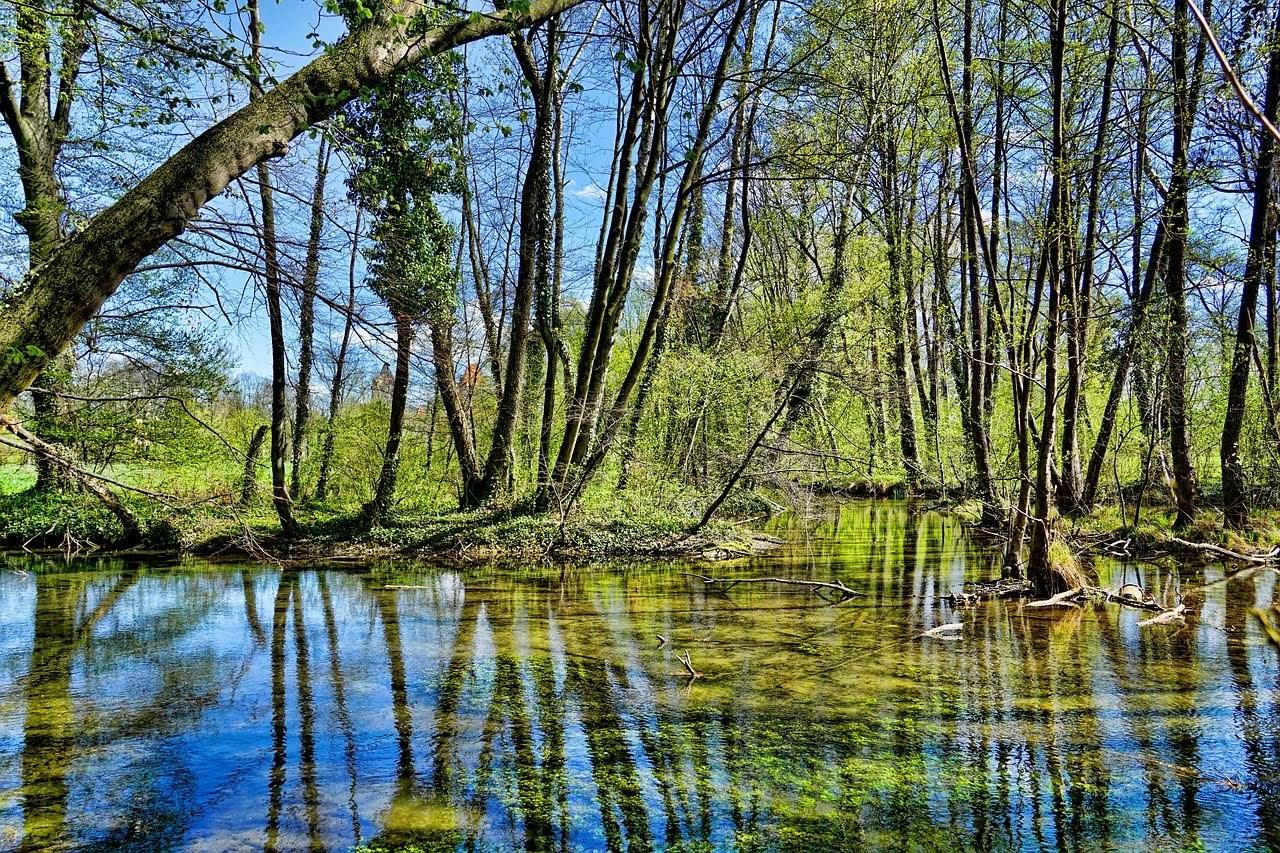 صورة اشجار المستنقعات وسط الغابة - اجمل واحلى صور الطبيعة الجميلة والخلابة في العالم