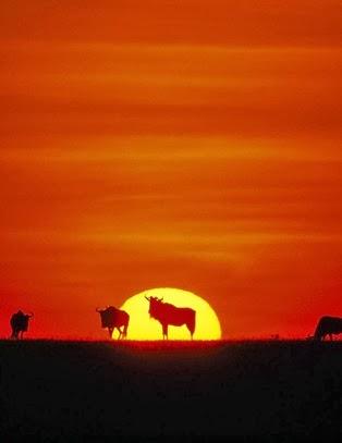Download   Patrimônio da Humanidade: Africa – Kilimanjaro Tanzania
