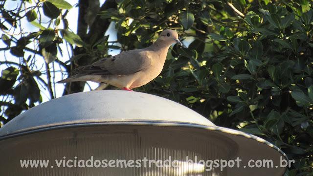 Praça dos Pássaros, Colinas, RS