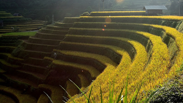 Top Ideal Places To See Amazing Rice Terraced In Northern Vietnam 1
