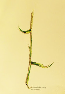 http://fineartamerica.com/featured/grass-blade-study-c-f-legette.html