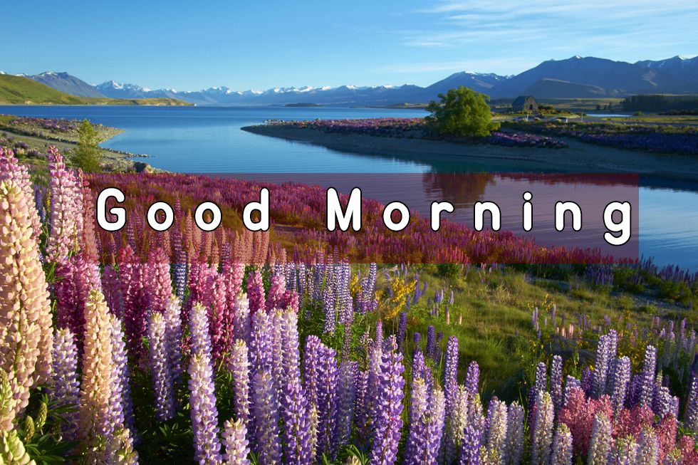 nature view good morning images