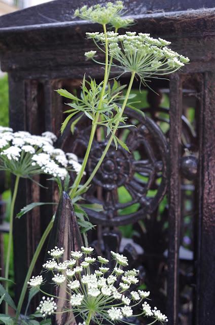 czarny-blog-ogrodniczy