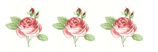 Rosas delicadas para cartas de amor