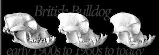 ossos da face de cães