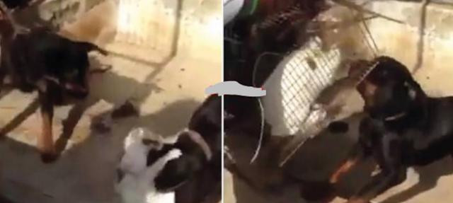 حاكم دبي يُعاقب مُعذّبي 'قطة' بهذه الطريقة الصادمة كانوا قد عذبوا قطة ووضعوها لكلاب شرسة لتنهشها بطريقة وحشية