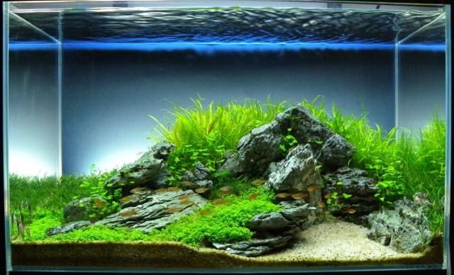70 Inspirasi Aquascape Dekorasi Cantik Aquarium Masa Kini Rumahku Unik