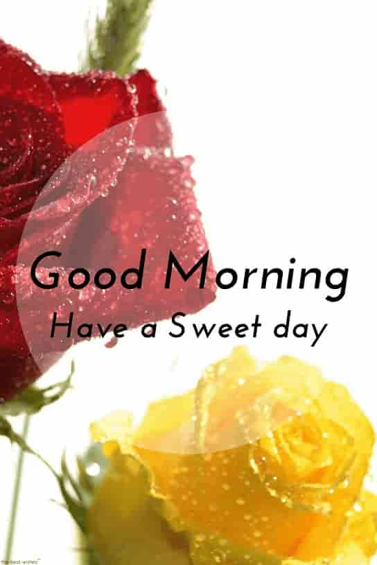 good morning wishes have a sweet day with hd wet roses
