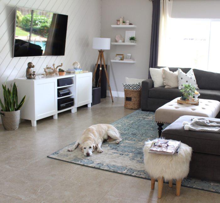 Pet Friendly Home Decor: Design In Colours. Colorful Ideas For Interior Design And