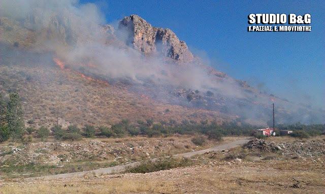 Φωτιά στην περιοχή της Προσύμνης στην Αργολίδα