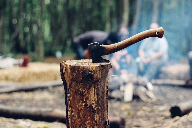 gambar penebangan hutan