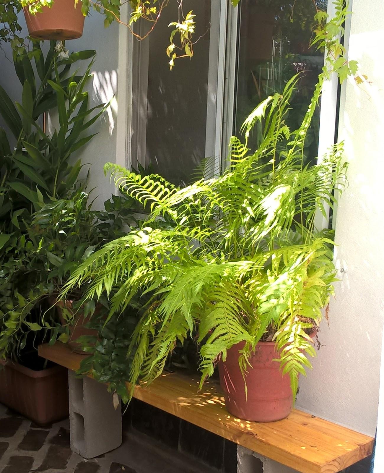 las macetas para baranda pueden usarse para colocar plantas en lugares con espacio limitado no entorpecen el paso e incluso se pueden colocar en balcones