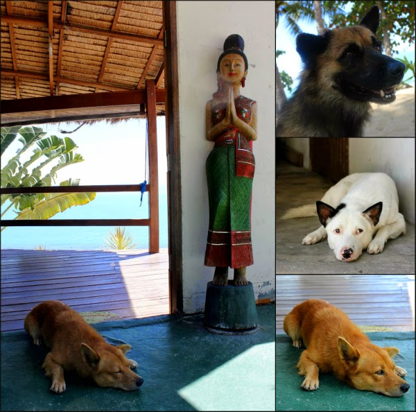 dogs Thailand island friends animals