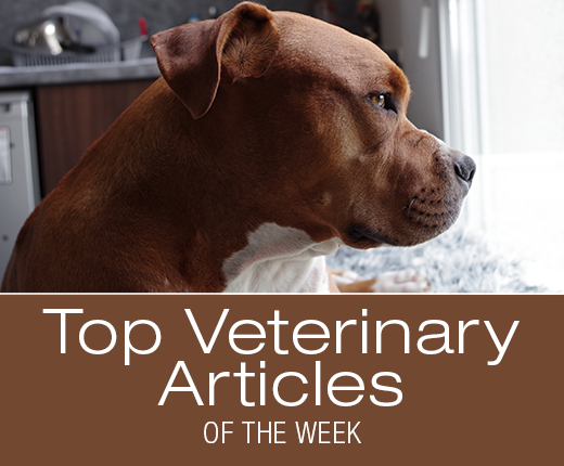 Top Veterinary Articles of the Week: Coughing, Fungal Infections, and more ...