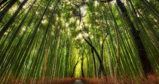 Significado de los Sueños: Soñar con Bosques