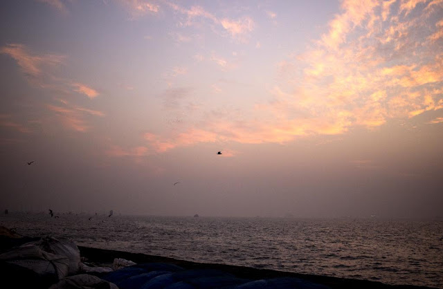 birds, dawn, feeding, arabian sea, sassoon docks, mumbai, india, clouds, sky,