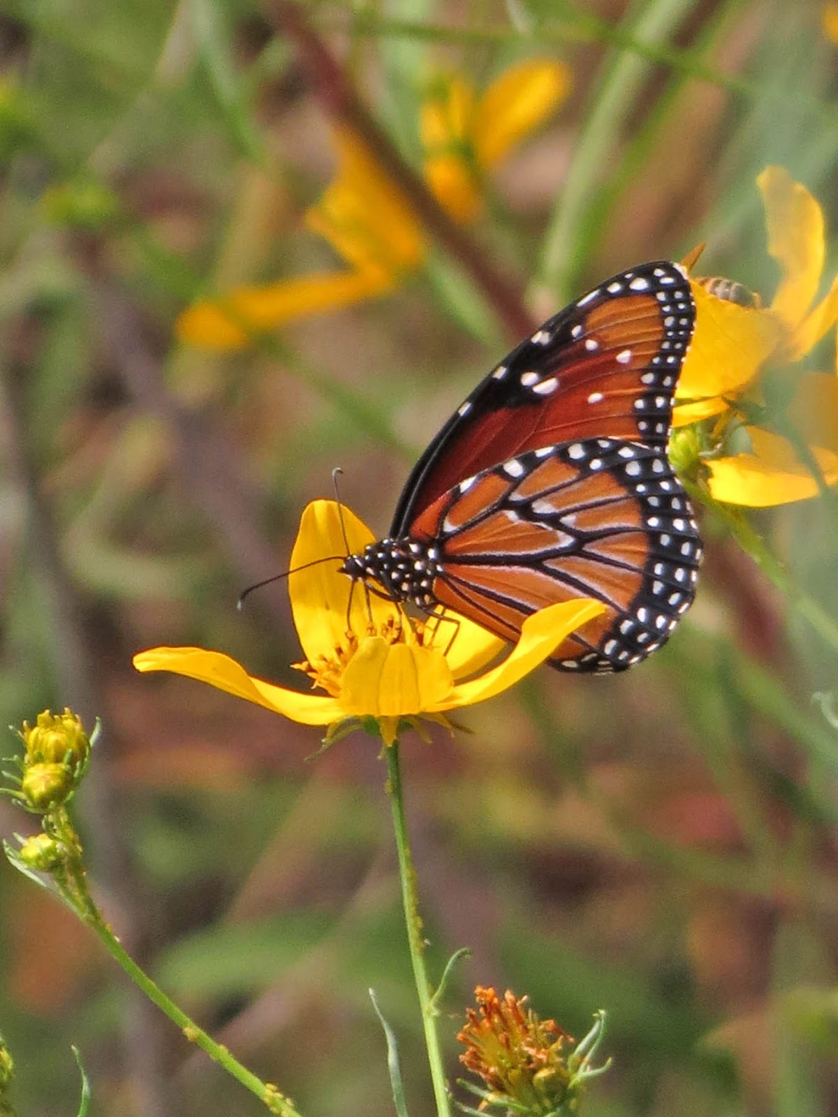 Home Improvement Loans >> Autumn Butterflies | Desert Colors