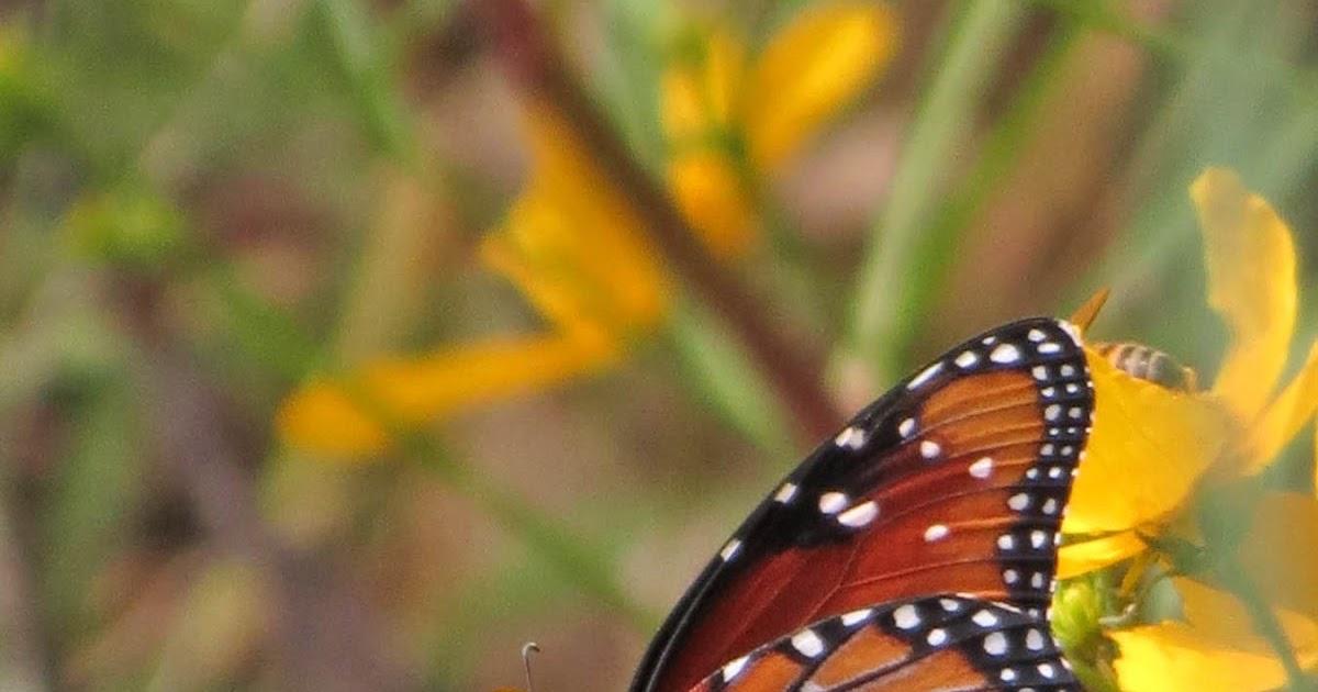 Autumn Butterflies Desert Colors