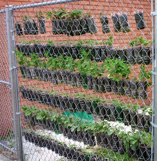 Start To Grow: Milk Container Gardening