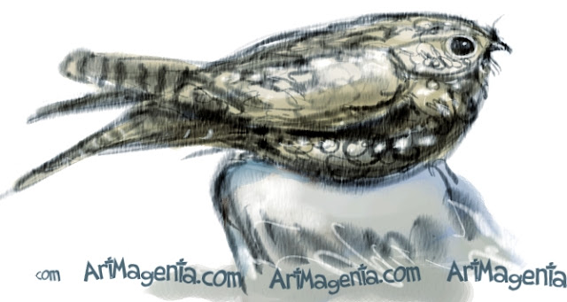 European Nightjar sketch painting. Bird art drawing by illustrator Artmagenta