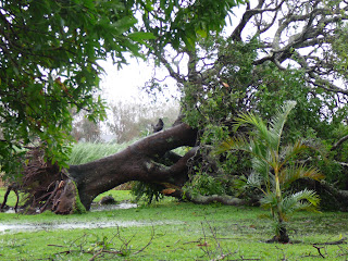 Surviving Cyclone Yasi
