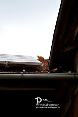Katze Mimi hält auf dem Hausach Ausschau nach dem Frühling