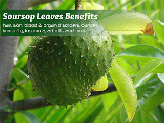 Benefits Soursop Leaf Men and Women For Fertility - Healthy T1ps