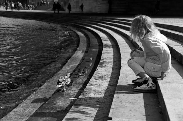 paris printemps balade photos canard famille