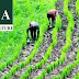 STEP Woos Nigeria's Youths To Agriculture