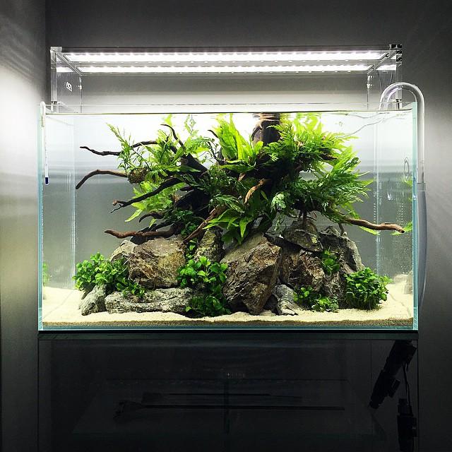 Bạn có thể kết hợp nhiều loại cây thủy sinh trong bố cục hồ thủy sinh một quả đồi