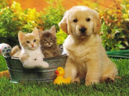 be70c2e3a4ef Πρωτιά για τις γάτες στην Ευρώπη!